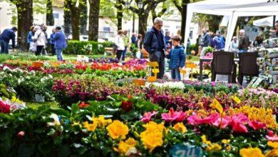 Photo of Festa della Primavera a Serrara, pronti gli stand per i floricoltori