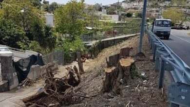 Photo of Panza e i lavori disastrosi: tranciati alberi, guardrail e cavi elettrici