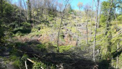 Photo of Fusti divelti nel bosco, il mistero degli alberi tagliati a Buceto