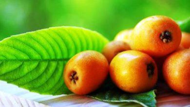 Photo of Riecco le nespole, anche sull'isola arriva il frutto di stagione
