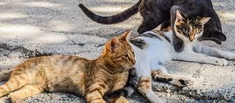 Photo of L'AVVISO Sterilizzazione gratuita per i gatti randagi