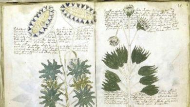 Photo of Manoscritto Voynich, c'è il dietro front degli studiosi