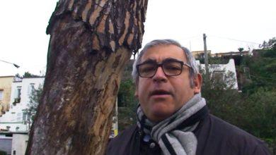 Photo of Allarme pini pericolanti all'esterno della scuola Marconi