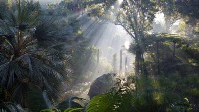 """Photo of Giardini La Mortella, al via le visite """"sensoriali""""  notturne"""
