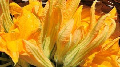 Photo of La strana estate e le sue verdure di stagione, riecco le buone zucchine