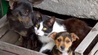 Photo of Parte la petizione per la riapertura del rifugio degli animali di Panza