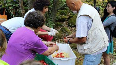 Photo of Ferragosto nei boschi della Falanga: il tradizionale appuntamento con l'associazione Terra