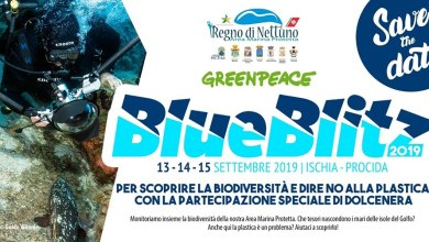 Photo of Blue Blitz:, a Ischia per dire no alla plastica con Dolcenera