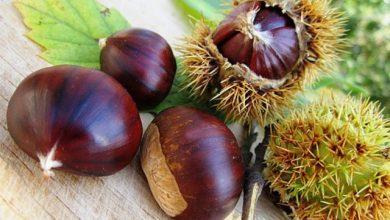 """Photo of """"cachissi"""", castagne e castagnaccio le """"ricchezze"""" d'autunno. Arriva la tradizione delle ardenti caldarroste nelle piazze"""