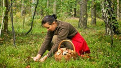 """Photo of Passione & responsabilita': il """"patentino"""" per riuscire a distinguere i funghi buoni da quelli velenosi"""