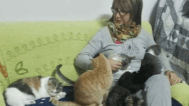 Photo of IL GRIDO DI DOLORE Mazzella esasperata: «Zero aiuto, chiudo il rifugio dei gatti»