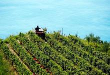 Photo of Il gusto dell'uva, la bellezza della vendemmia e il profumo  del mosto ci  conducono al fantastico e poetico mondo di San Martino