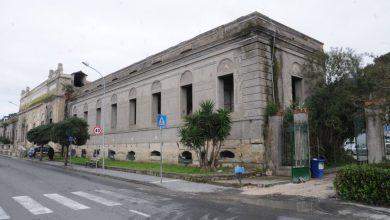 Photo of Pini a rischio nel Pio Monte, intervento d'urgenza