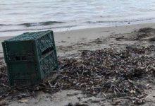 Photo of Orrore a Lacco Ameno, ritrovato in spiaggia il cadavere di un cane rinchiuso in una cassetta