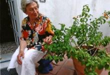 Photo of Anna Colucci raggiunge l'invidiabile età di 102 anni messaggi augurali  per una gentildonna isolana