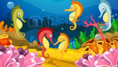 """Photo of Il cavalluccio marino eretto e fiero """"animale"""" divino per gli antichi Per i moderni pescatori dell'isola un """"pesce"""" bello e aristocratico"""