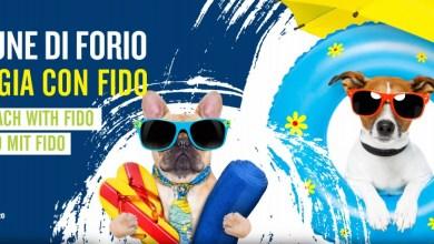 """Photo of Forio, arrivano le spiagge """"Dog friendly"""""""