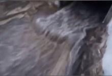 Photo of Rio Corbore, l'ultimo sfregio: anche nafta nelle acque del Lido