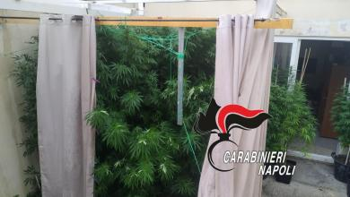 Photo of UNA PIANTAGIONE DI CANNABIS IN GIARDINO, ARRESTATO DAI CARABINIERI