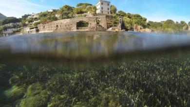 Photo of Ischia in età romana tra terra e mare, incontro di studi per scoprire Aenaria