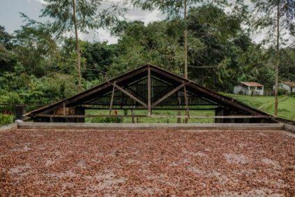 Fazendas de cacau abrem porteiras para visitantes 6