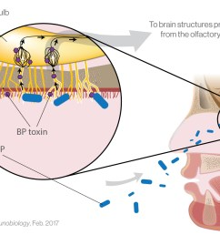 pertussis diagram manual e bookiliad biotechnologiesiliad biotechnologies is partnered with leading scientists to investigate the relationship [ 1588 x 863 Pixel ]