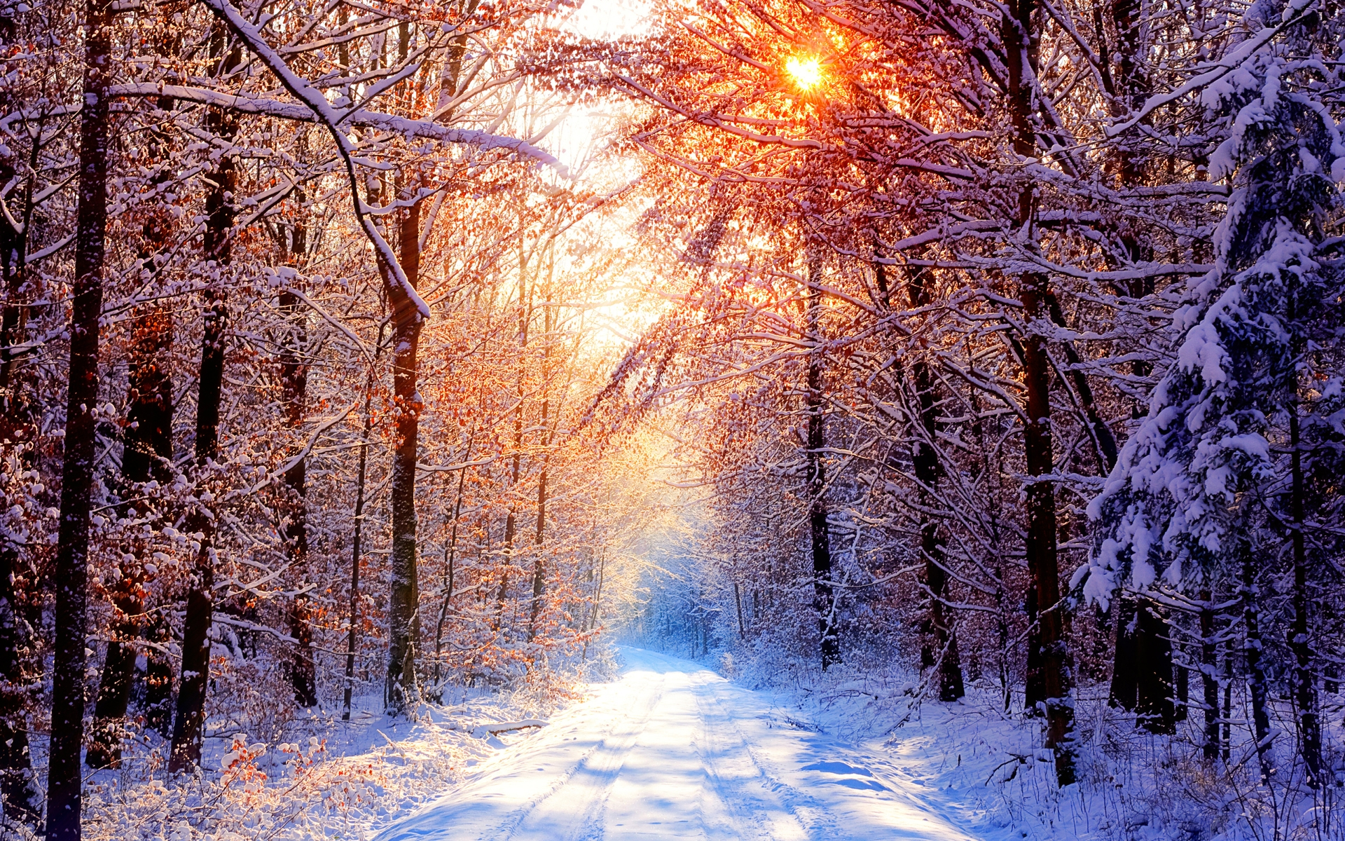 Animated Sunset Wallpaper Daily Wallpaper Snowy Forest Road On A Beautiful Winter