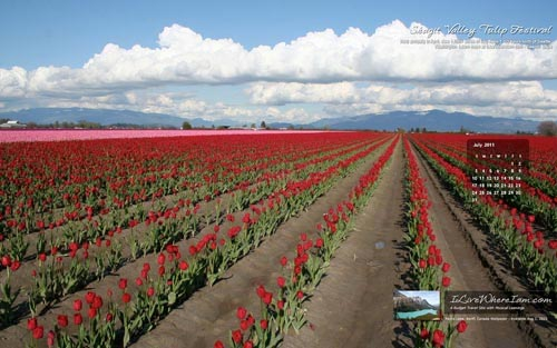 Free Desktop Wallpaper - Skagit Valley Tulip Festival