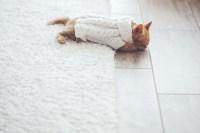 3 Pet-Friendly Flooring Options   Home Improvement ...
