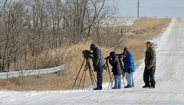 Scoping for Snowy Owl