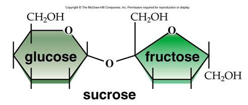 (c) McGraw Hill. Sucrose Illinois Science Council corn syrup
