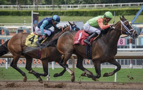 small resolution of horse racing rhythm movement illinois science council blog
