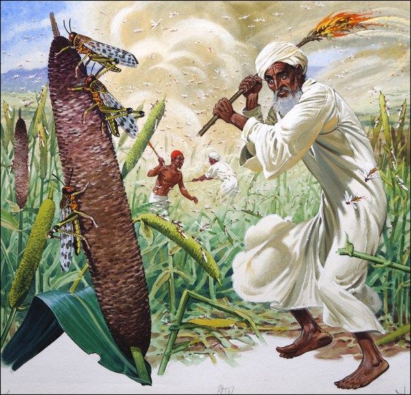 Locusts - Biblical Plague Original Bernard