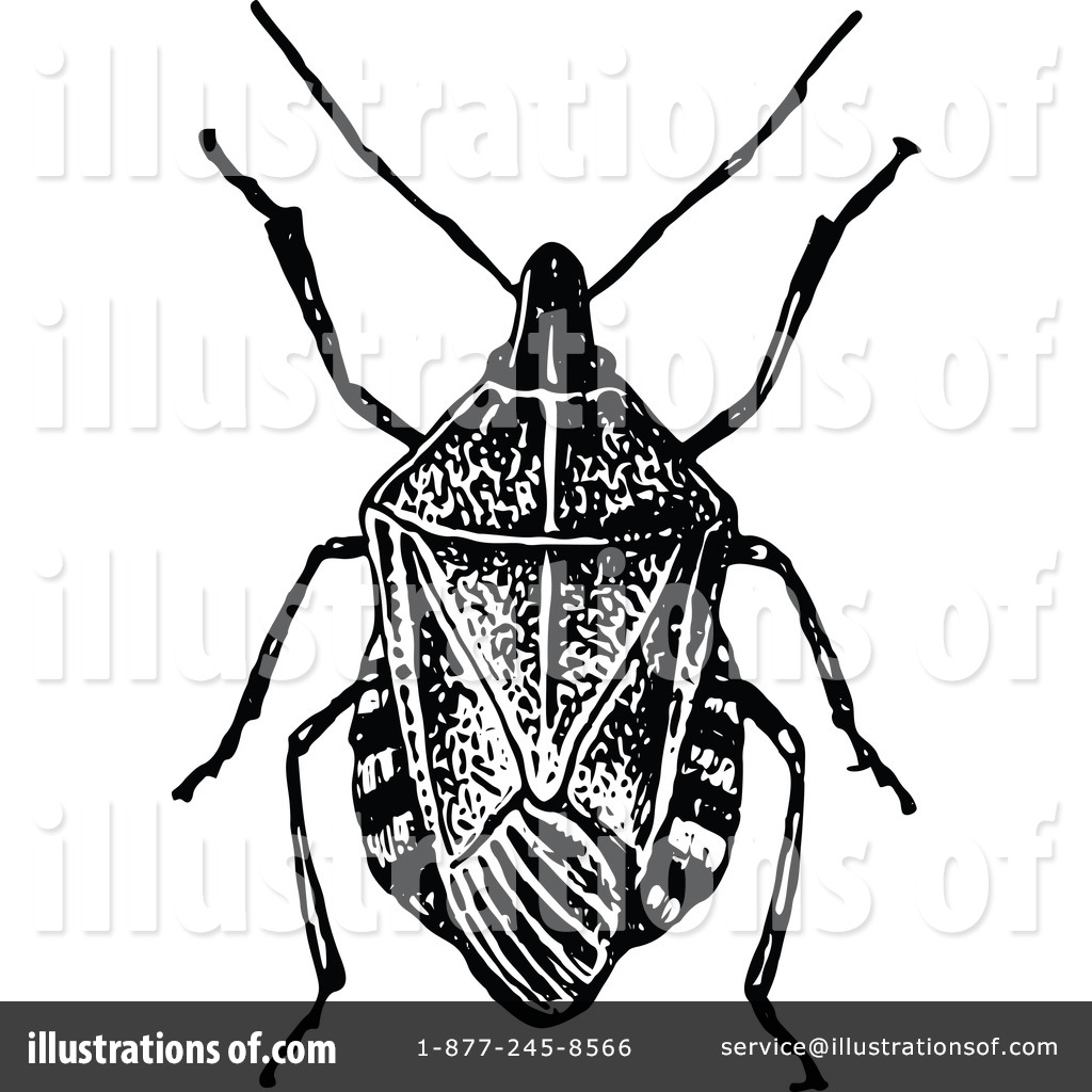 Beetle Clipart