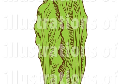 Vegetable Garden Cliparts Stock Vector And Royalty Free