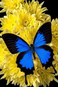 Farfalle Stupende Il Magico Mondo Dei Sogni