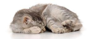 Cat very Sweet