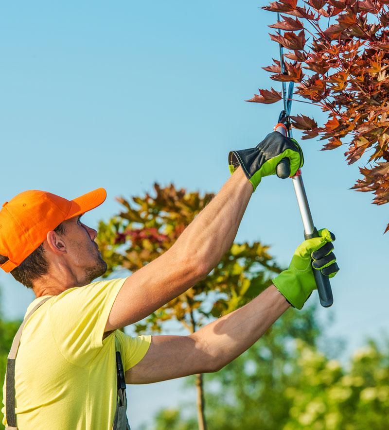 Lavori di Giardinaggio 2