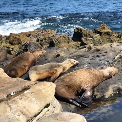 San Diego - Leoni marini