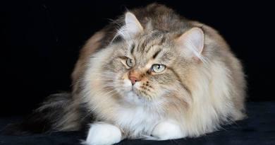 Gattomania 2018 - la bellezza dei gatti in mostra