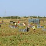 Immigrati agricoltura