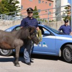 pony-polizia