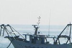 La moria delle vongole mette in crisi le imprese ittiche