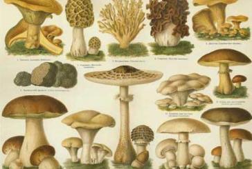 A caccia di funghi, il corso del