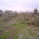 fossacesia-ulivi-andrea natale