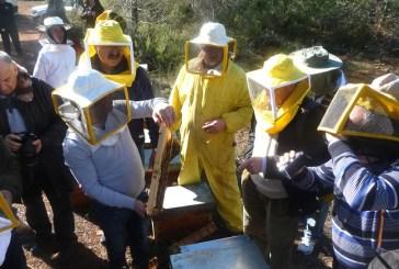 Il futuro dell'apicoltura: operatori ed esperti a confronto