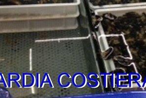 Filiera commerciale della pesca, controlli a tappeto della Capitaneria