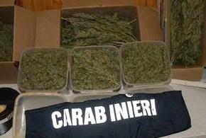 In bagagliaio auto 52 kg di marijuana