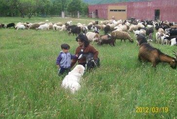 """""""Scusate se esistiamo"""", i pastori abruzzesi a difesa del loro mondo"""