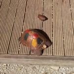 tartaruga lecceta